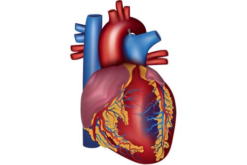 循環器(心臓・血管)疾患の診療